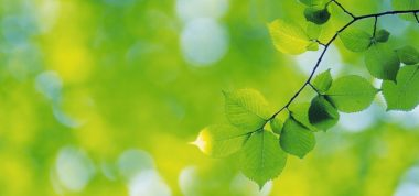 Image shows green leaves in focus with blurred green background